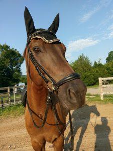 Protégez votre cheval avec un bonnet chasse mouche